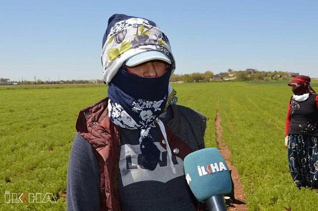 Hilvan tarım işçileri