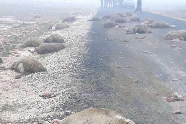 Okul servisi koyun sürüsüne daldı: 9 öğretmen yaralandı