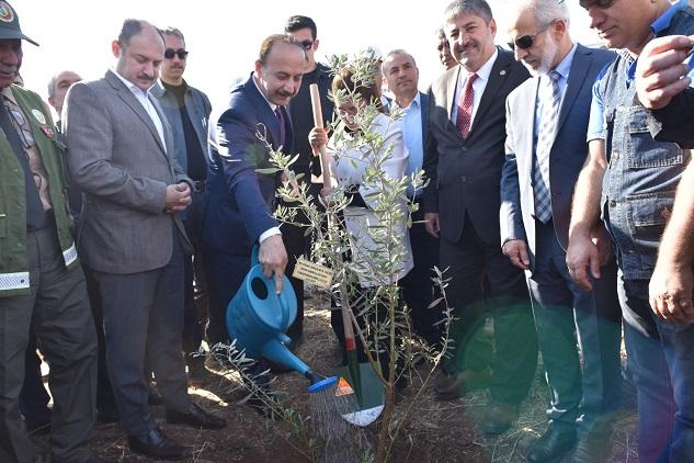 Gülpınar, ağaçlandırma kampanyasına katıldı