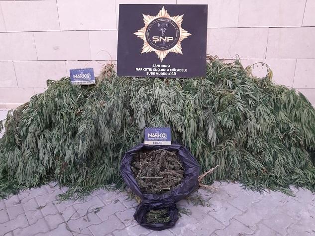 Şanlıurfa'da uyuşturucu operasyonu: 20 gözaltı