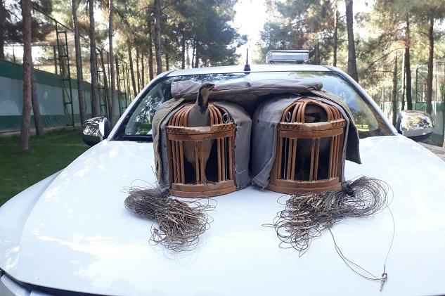 Kaçak keklik avlayan şahıs suçüstü yakalandı