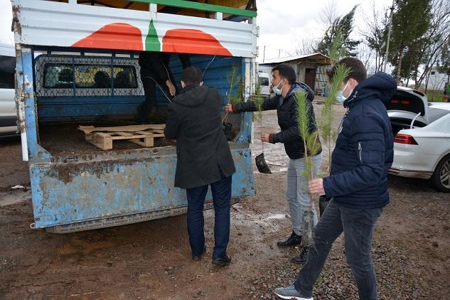 Siverek Belediyesi okullara fidan dağıttı