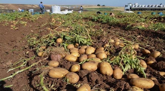 İhtiyacı olan ailelere ücretsiz patates ve soğan dağıtılacak