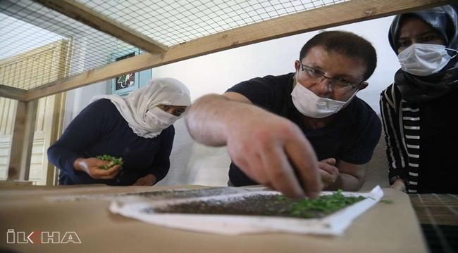 İpek böcekçiliğinin yaygınlaştırılması için çalışma başlatıldı