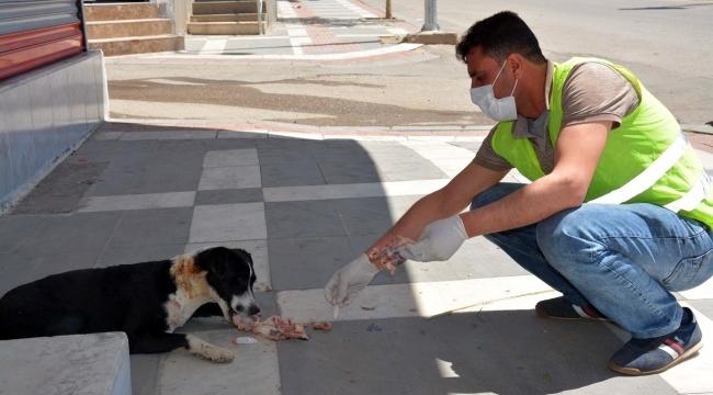 Siverek Belediyesi yavru köpeğin ötenazi ile öldürüldüğü iddialarını yalanladı