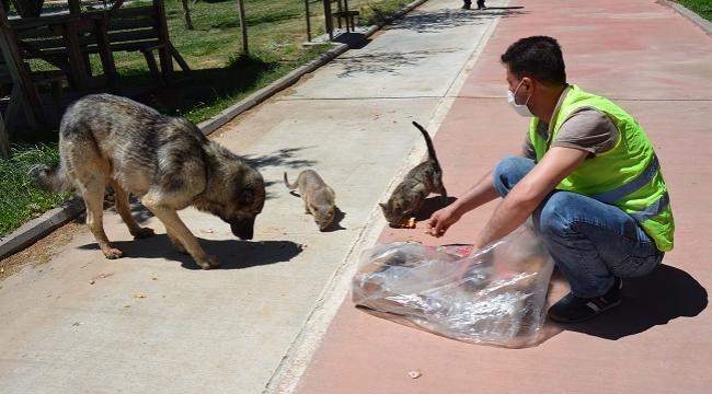 Siverek'te tam kapanma günlerinde sokak hayvanları unutulmadı
