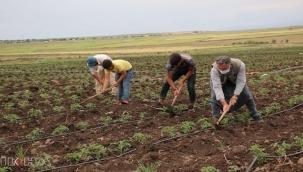 """Siverekli çiftçiler: """"Hem oruç tutmaya hem de çalışmaya alışmışız"""""""