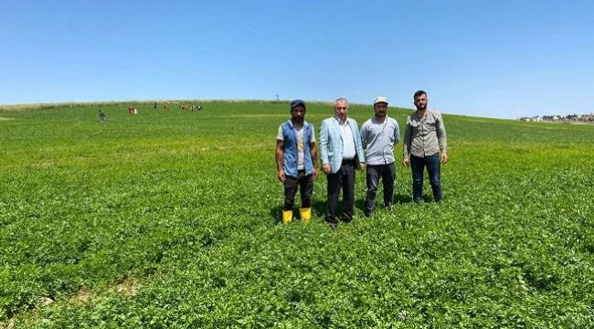 Viranşehir'de çiftçiler alternatif ürünlere yöneldi